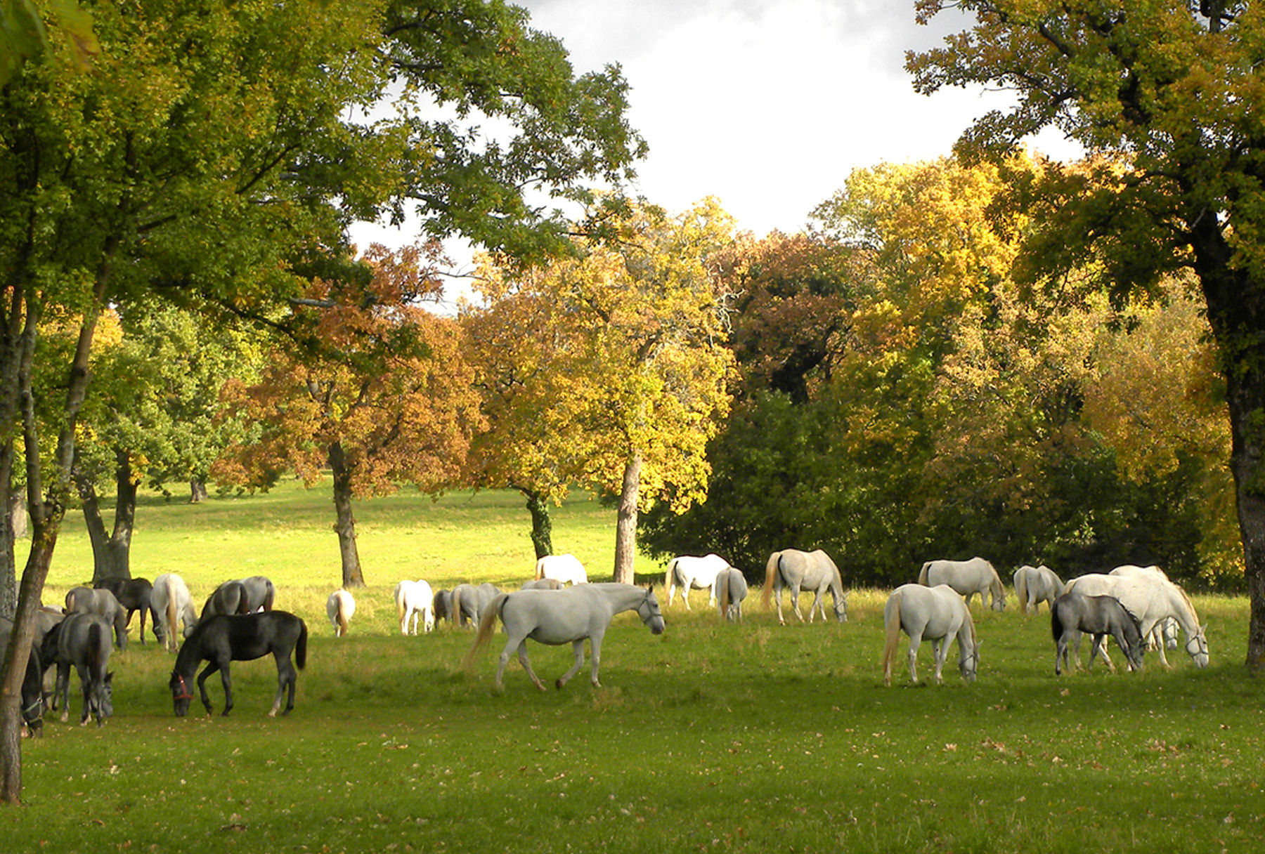 10 Beautiful Photos to Inspire You to Visit the Lipica Stud Farm in ... for Most Beautiful Farms In The World  568zmd