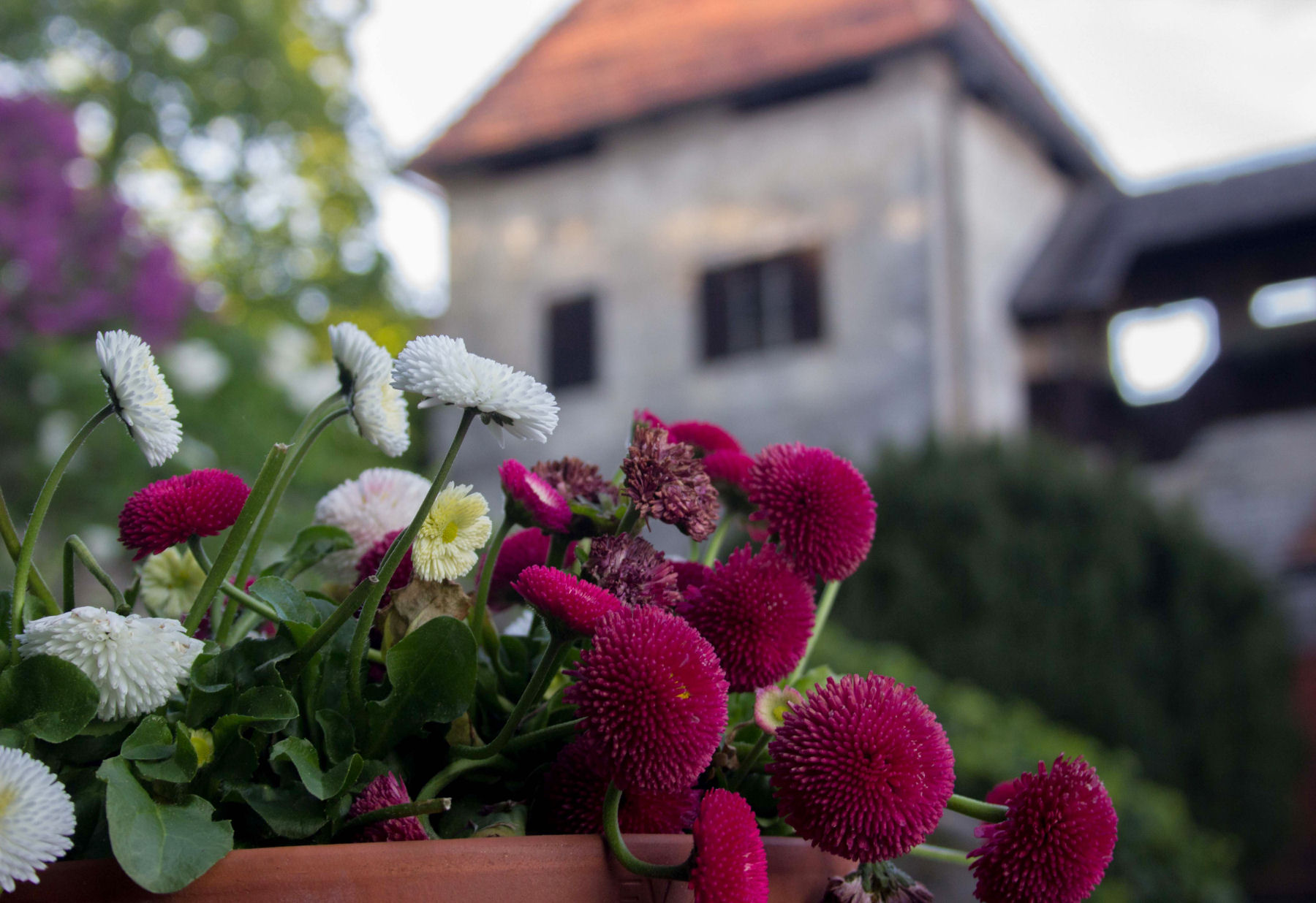 Some flowers at Bled Castle