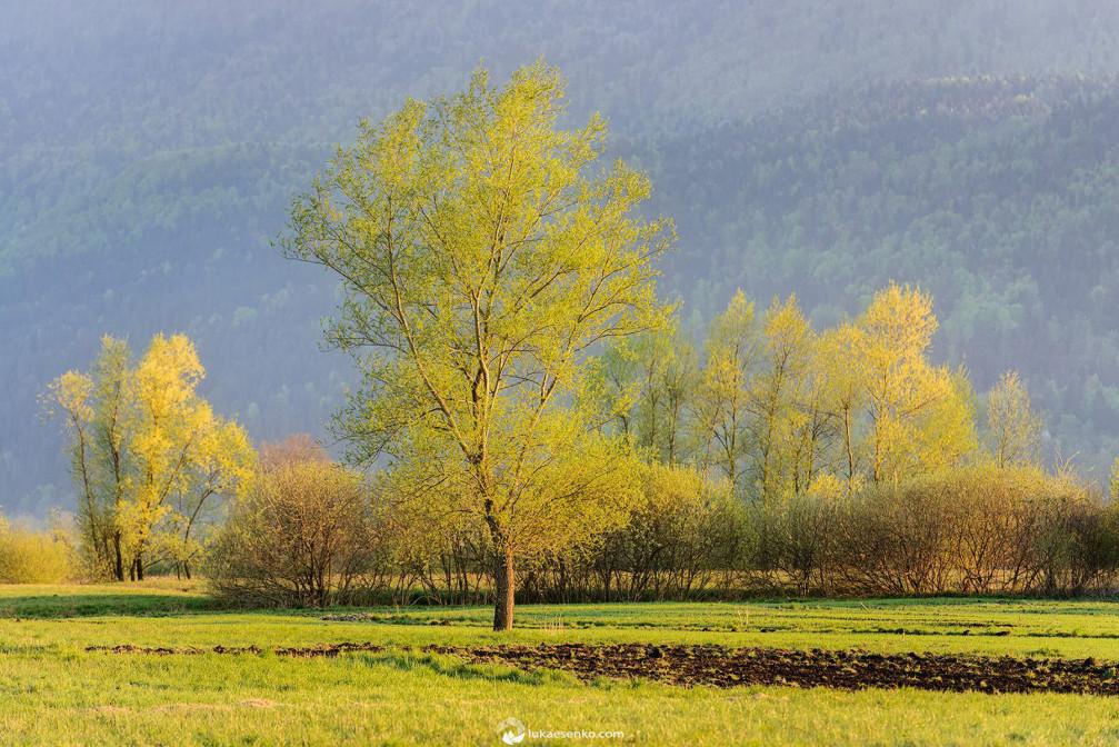 Ljubljana marshlands in Slovenia