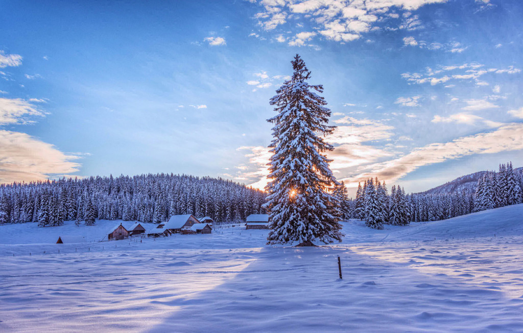 A cold winter morning on the Pokljuka plateau, Slovenia