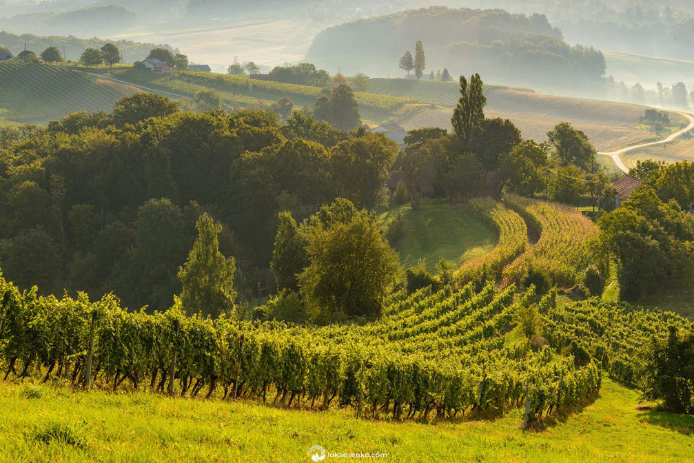 Vineyards in the Prlekija region of Slovenia