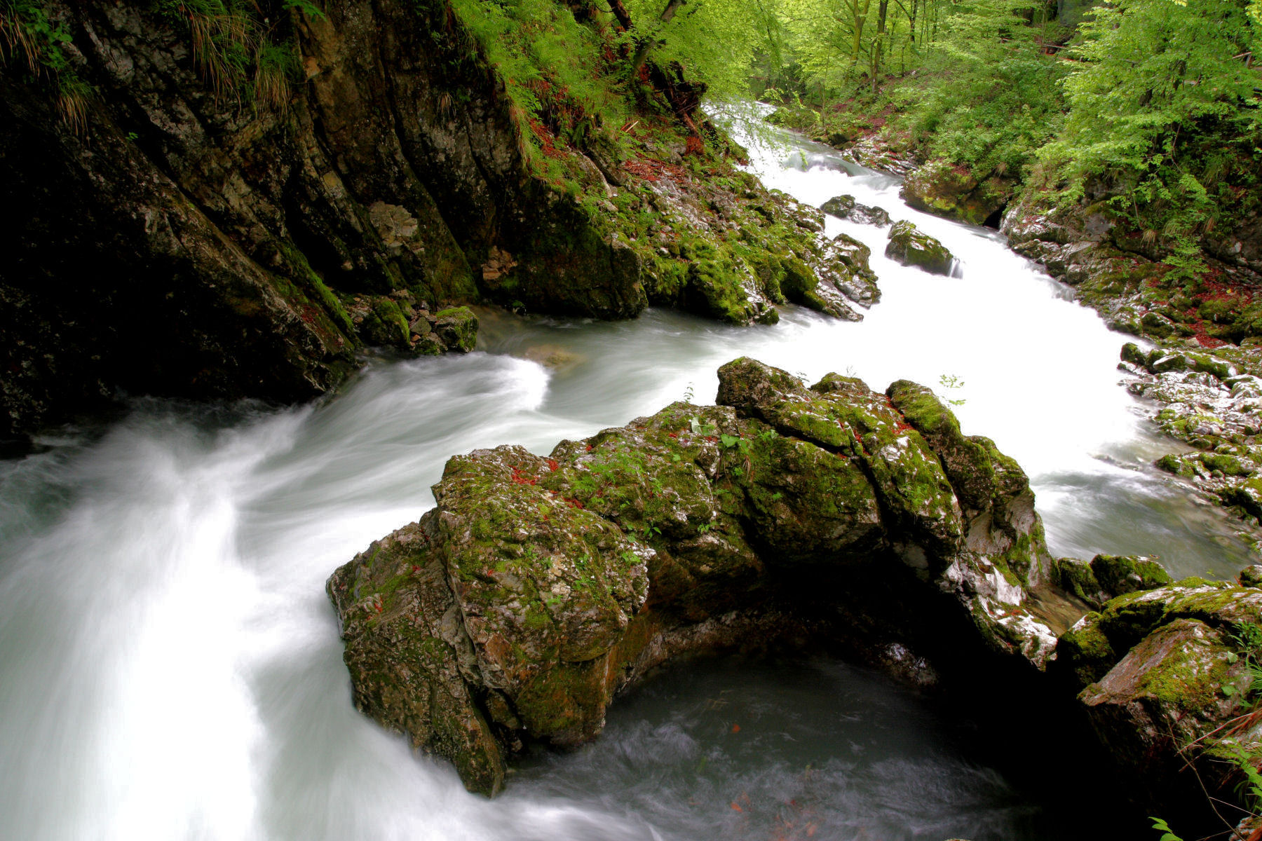 Nature at its best in Vintgar Gorge, Slovenia