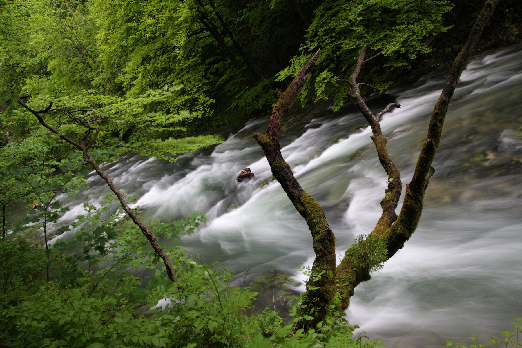 Vintgar Gorge is wonderful with lots of opportunities for that prize winning photo