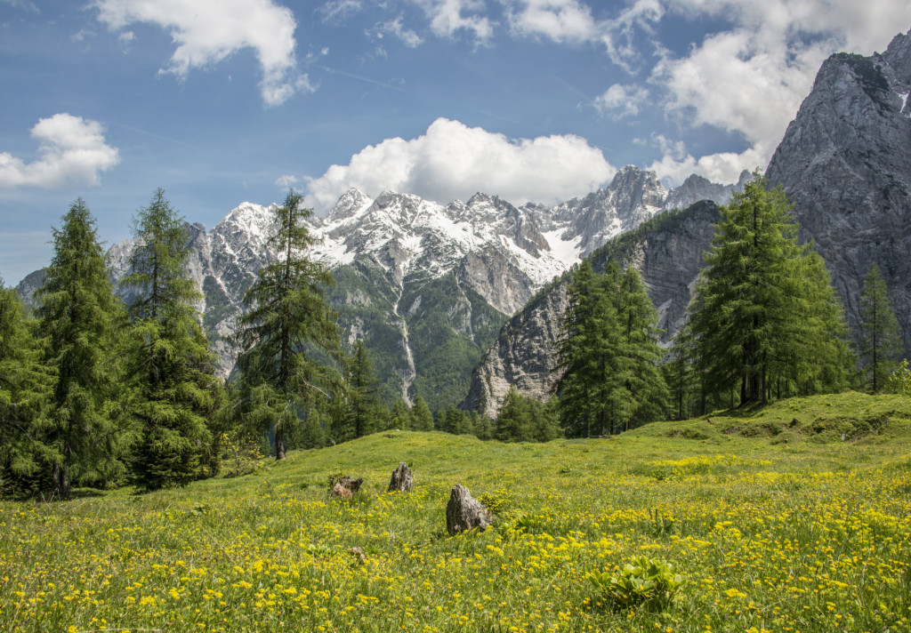 A blooming meadow below the mountains of Slovenian Alps beside the road to Vrsic Pass