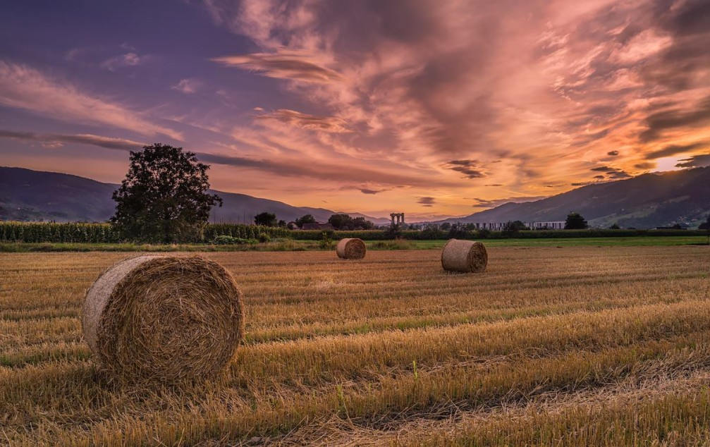 Round straw bales in harvested fields near the Bezena village in the Styria region of Slovenia