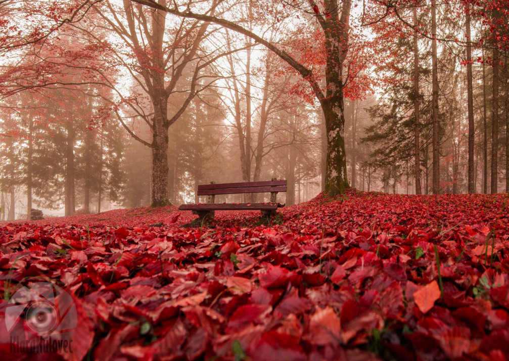 Autumn Bench in Bohinj, Slovenia