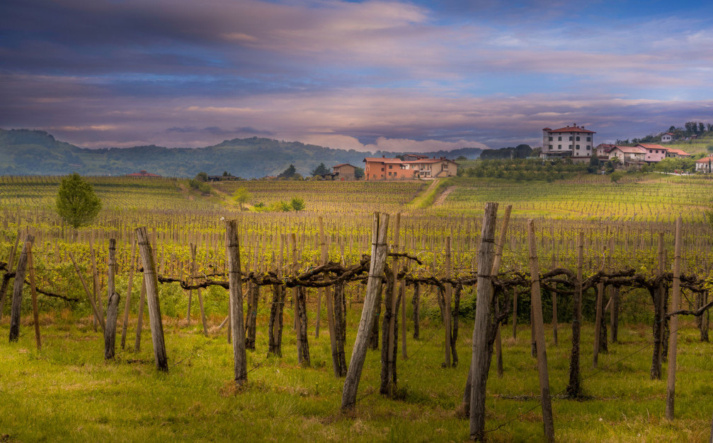 Goriska Brda vineyards, Slovenia