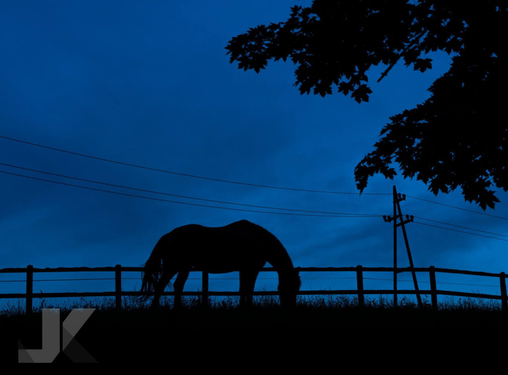 A horse grazing on a pasture at dawn somewhere in Slovenia