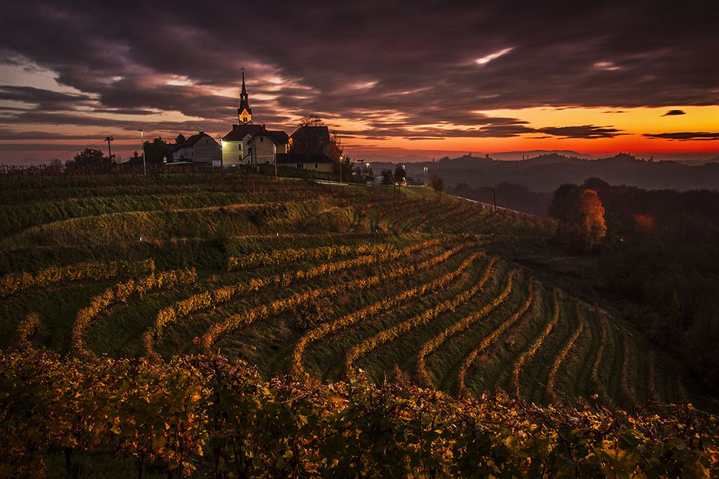View of the Jeruzalem vineyards in the Ljutomer Ormoz hills in the Prlekija region of Slovenia