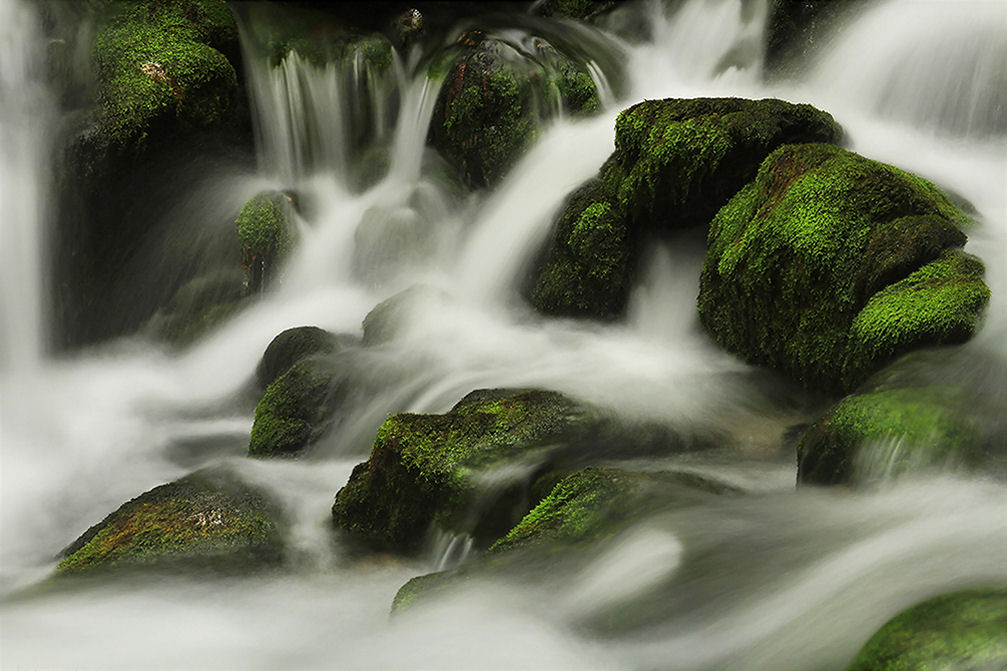 The river Kamniska Bistrica springs from the beautiful moss-grown rocks