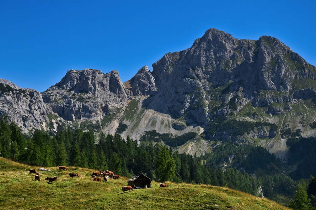 Mountain pasture Planina Pod Miselj Vrhom in the Julian Alps, Slovenia