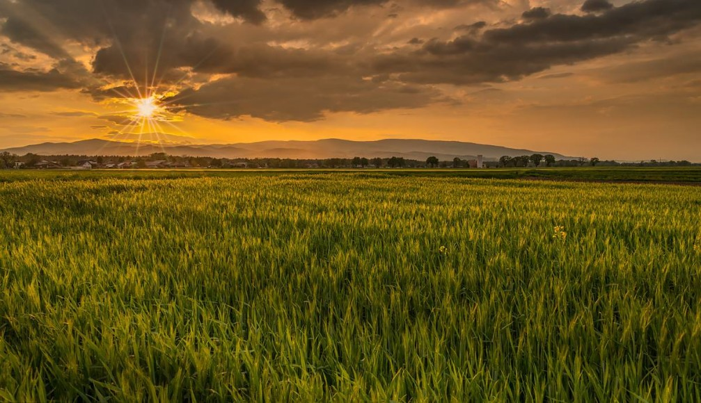 View across wheat fields near the village of Podova in the Styria region of Slovenia