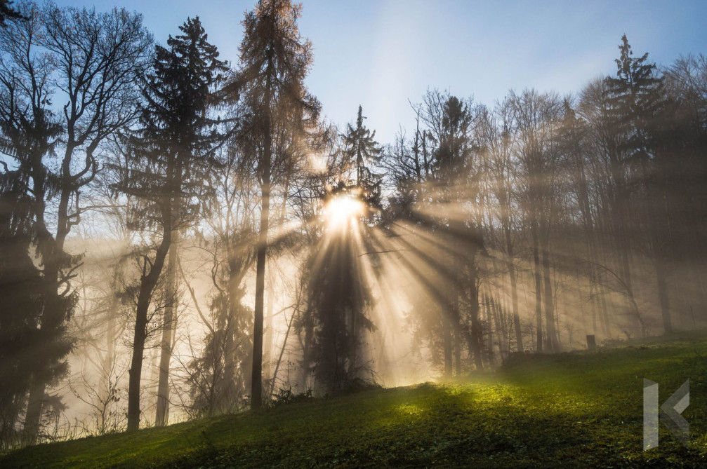 Sun rays filtering through the trees in the Pohorje Mountains, Slovenia