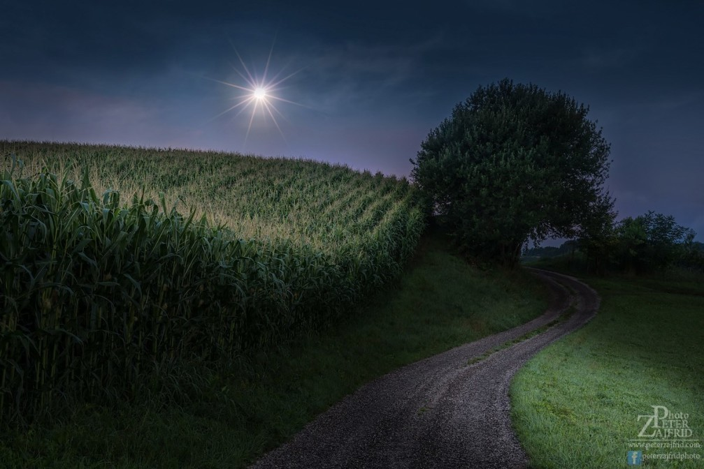 Corn fields along a dirt road at night in the Styria region of Slovenia