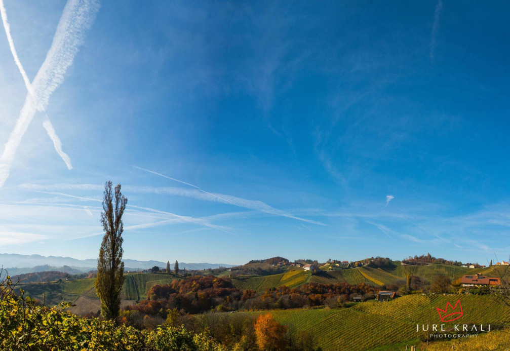 The beautiful vineyard landscape of the Slovene Hills in northeast Slovenia near the Spicnik village