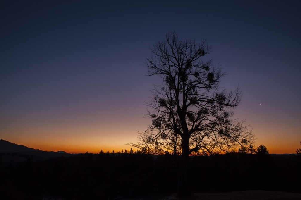 A lonely tree in a countryside near the village of Borovak Pri Polsniku just before sunrise