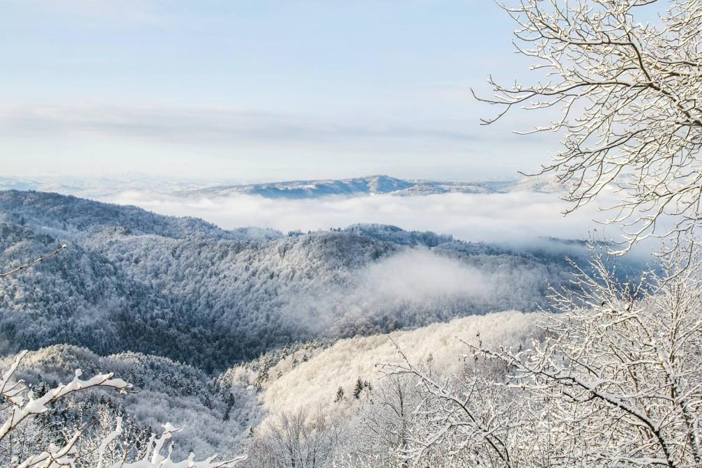 Snowy forests near the Dolgo Brdo village, Slovenia