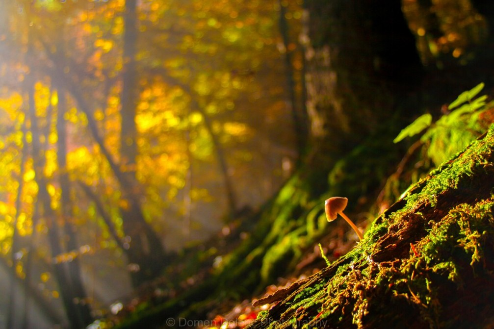 Mushroom growing in a woods in Slovenia in autumn