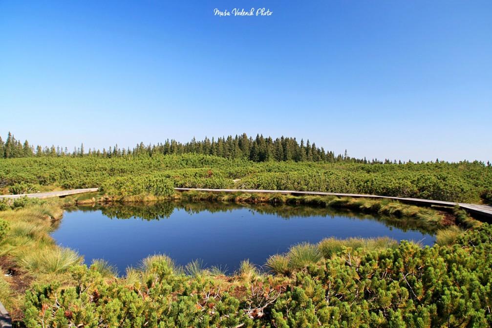 Lovrenc Marsh Lakes, a turf swamp with more than 20 tiny lakes near Rogla, Slovenia