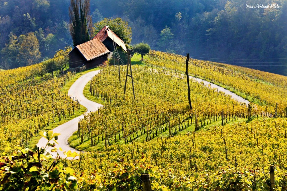 A heart-shaped road amidst the vineyards in the village of Spicnik, Slovenia