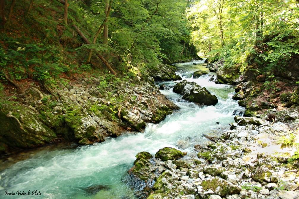 River Radovna flowing through the Vintgar Gorge a.k.a. Bled Gorge, Slovenia