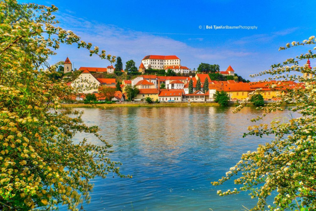 A view of the town of Ptuj and its hilltop castle on a sunny spring day
