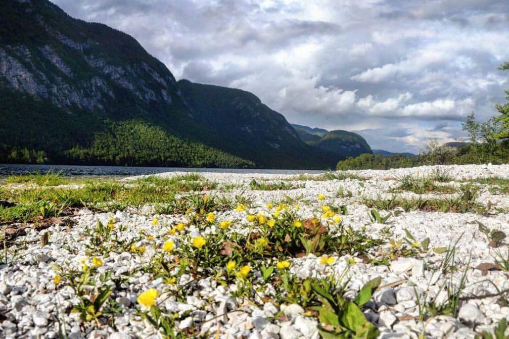 Lake Bohinj in the Triglav National Park with beautiful nature all around
