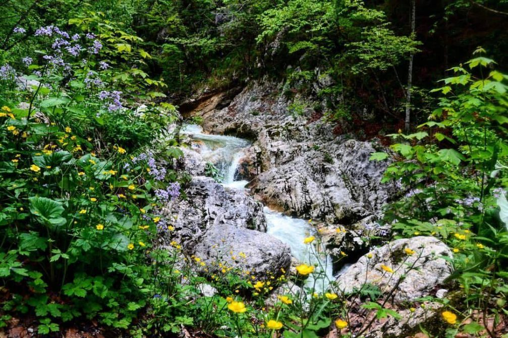 The Savica stream on the approach to Savica Waterfall in Bohinj, Slovenia