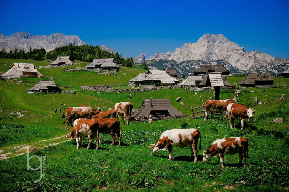 The high mountain herdsmen's settlement of Velika Planina in the Kamnik Alps in Slovenia