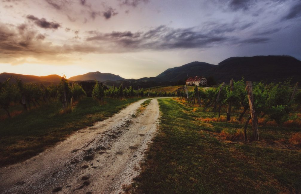 A dirt road through the Skalce vineyards in the municipality of Slovenske Konjice in eastern Slovenia