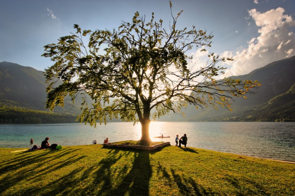 The most photographed tree in Slovenia with Lake Bohinj in the background