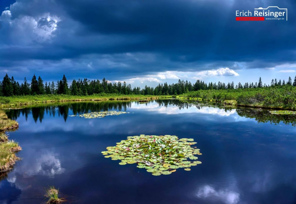 Lake Ribnisko Jezero in the Pohorje Hills surrounded with pine trees and adorned with water lilies