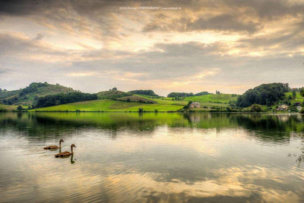 pernica-lake-slovenia-swans