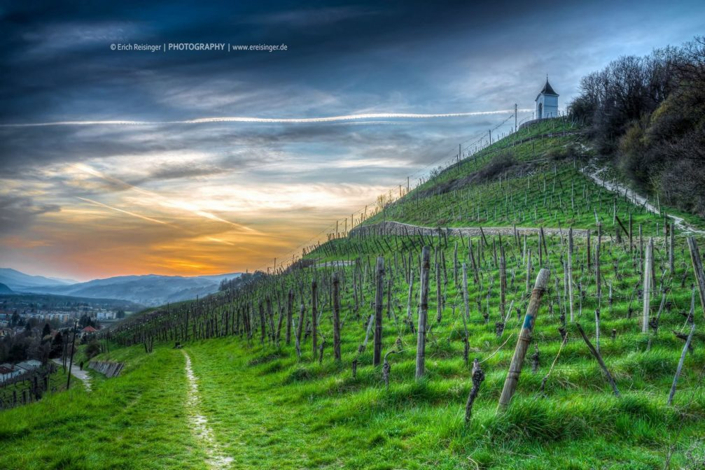 Pyramid Hill vineyards above the city of Maribor, Slovenia