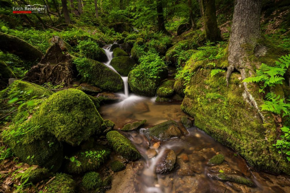 One of the streams in the heavily wooded Pohorje massif in northeastern Slovenia