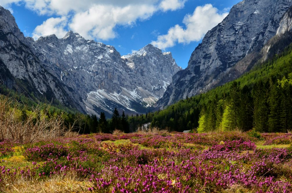 Krma Valley in the Triglav national park in spring with flowers blooming everywhere