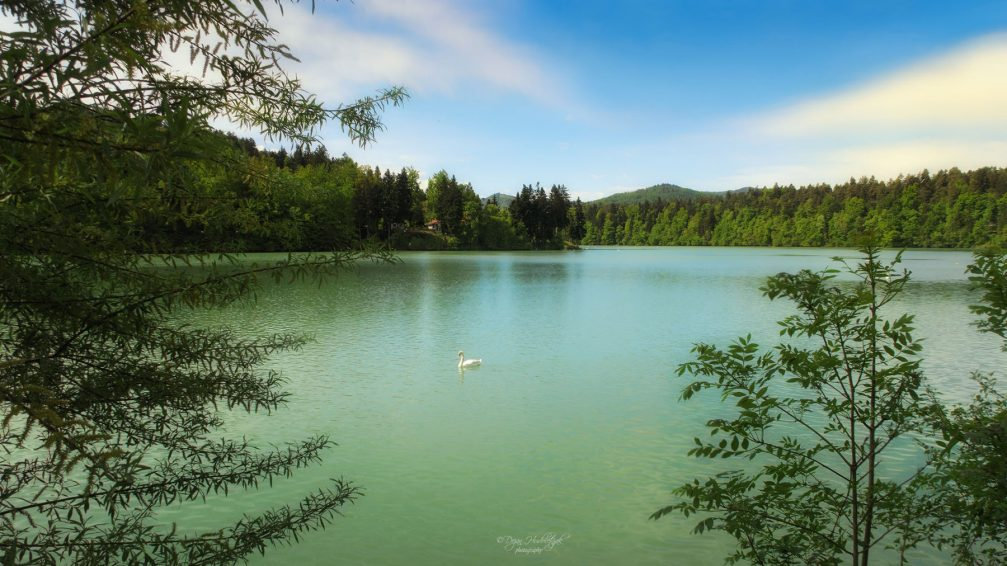 Lake Zbiljsko Jezero with a beautiful white swan flowing in the middle