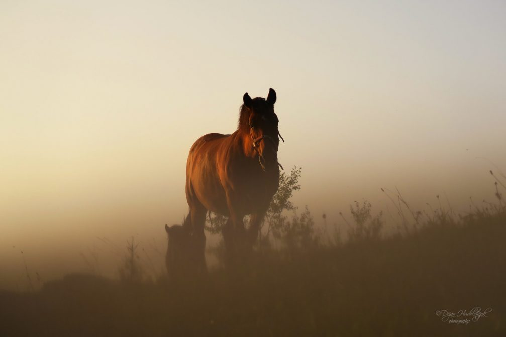 A horse on a pasture in Nemilje, Slovenia