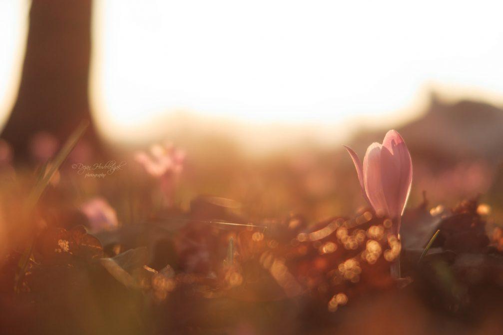 spring-season-slovenia