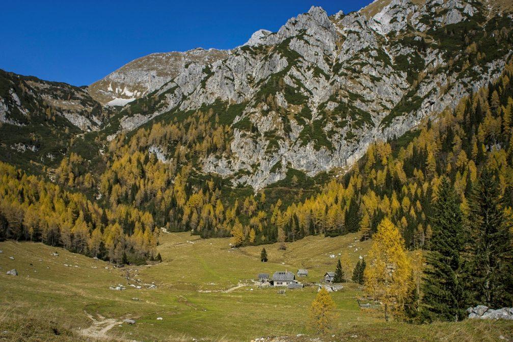 Wooden huts on the Konjscica alpine meadow on the Pokljuka plateau in Slovenia