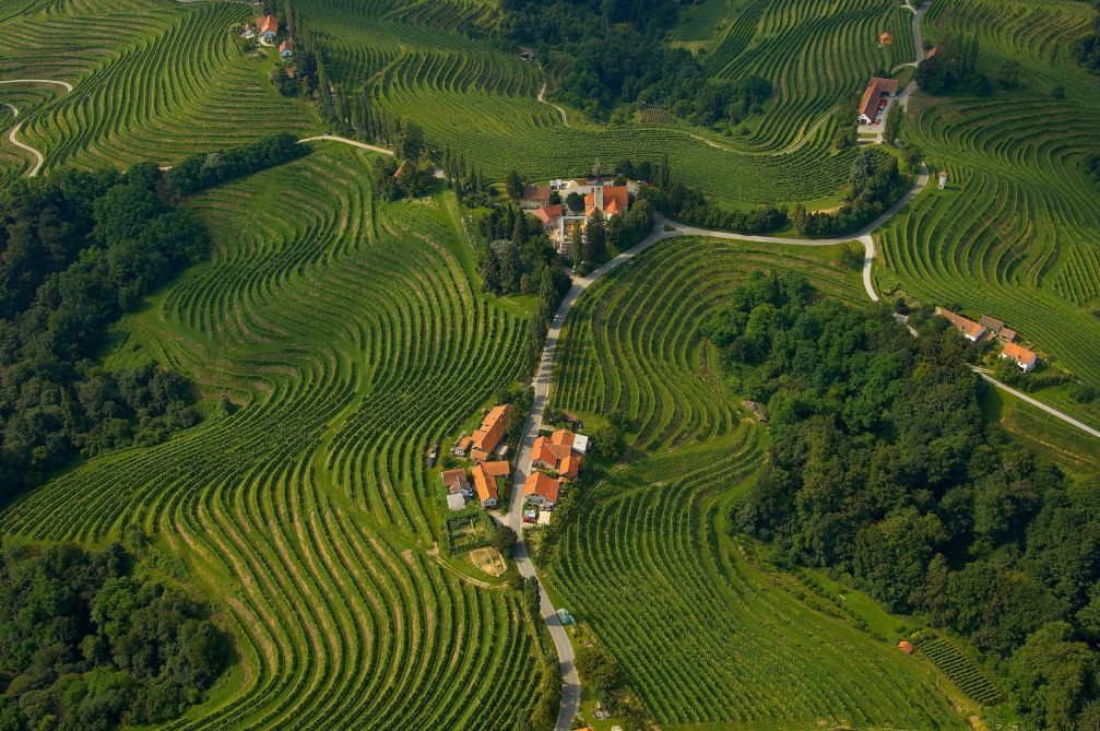 An aerial view of the vineyards at Slovenske Gorice in Slovenia