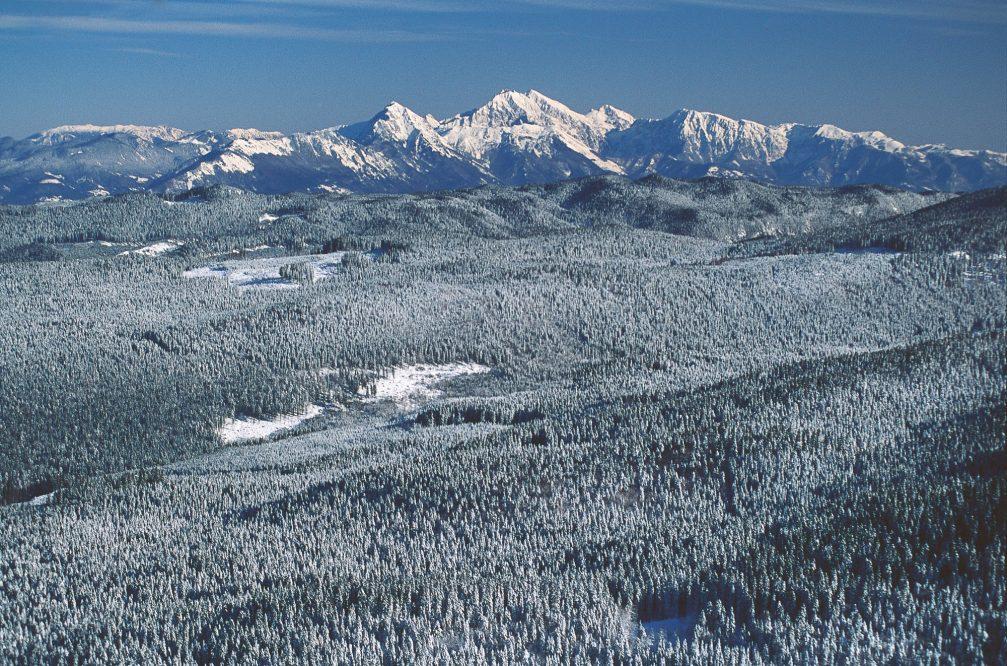 An aerial view of Pokljuka, a forested karst plateau in northwestern Slovenia