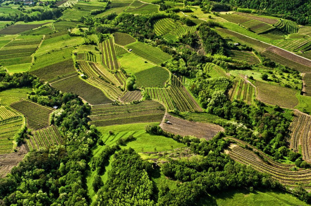 An aerial view of the vineyards in the Upper Vipava valley in western Slovenia