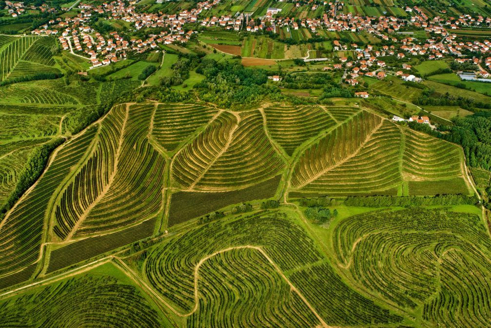 An aerial view of the vineyards situated mostly on marl terraces of Vipava hills in Slovenia