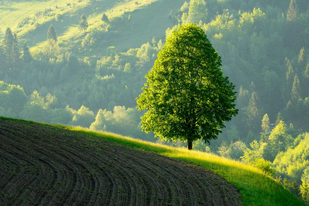 Slovenia countryside with a Linden tree