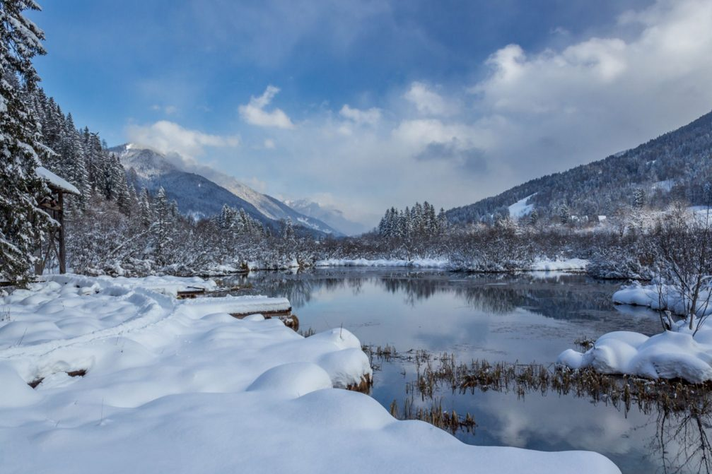 The Zelenci nature reserve with a brilliant jade green lake covered with snow in the winter