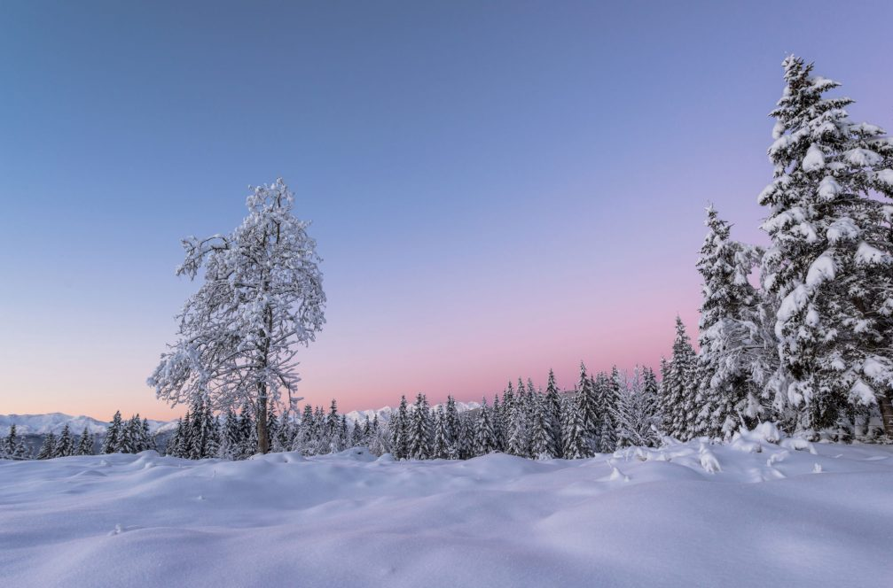 Early morning at the Pokljuka Plateau in winter with a thick layer of fresh snow