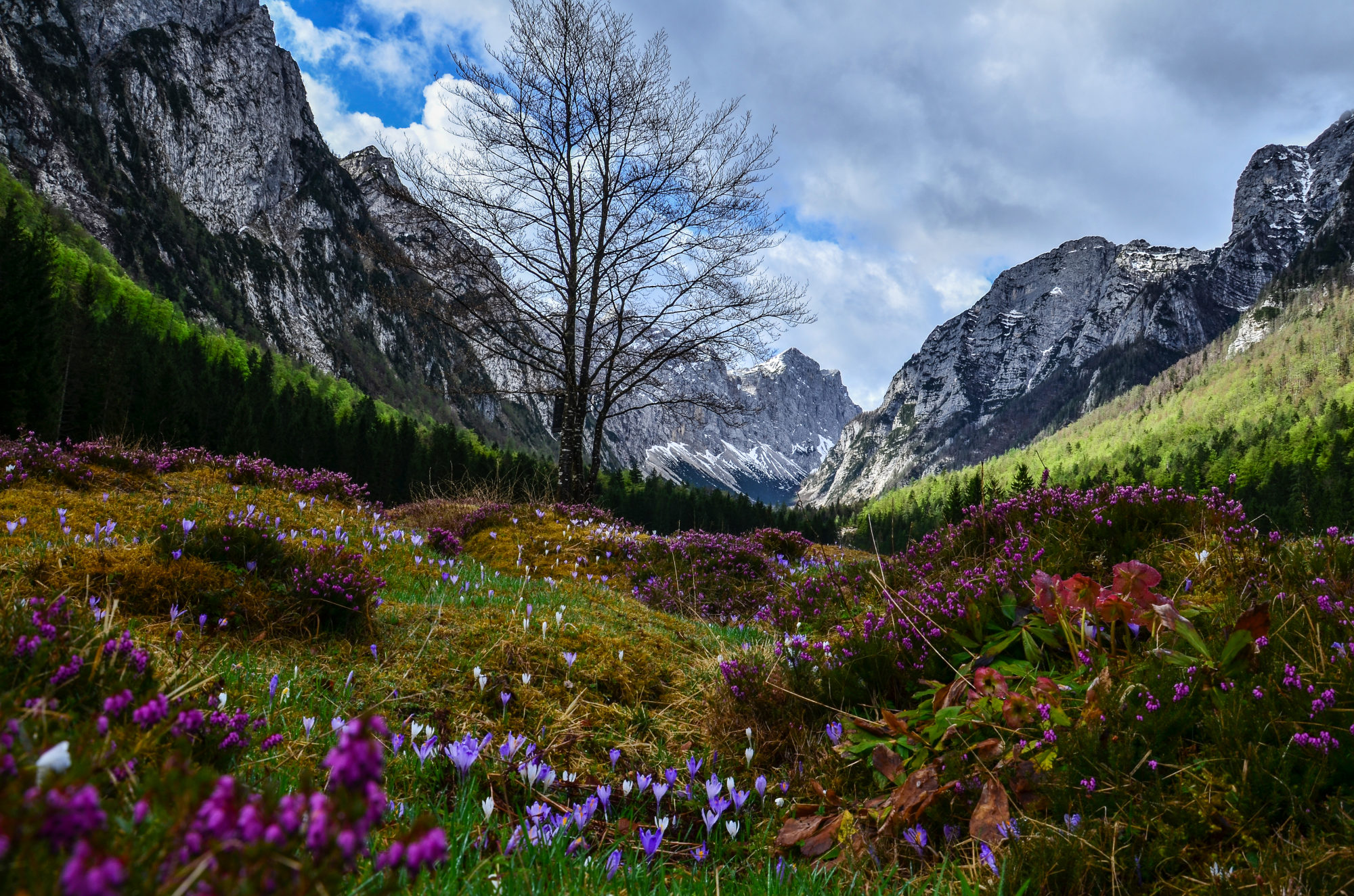 50 Amazing Photos That Show The Beauty Of Slovenia In Spring